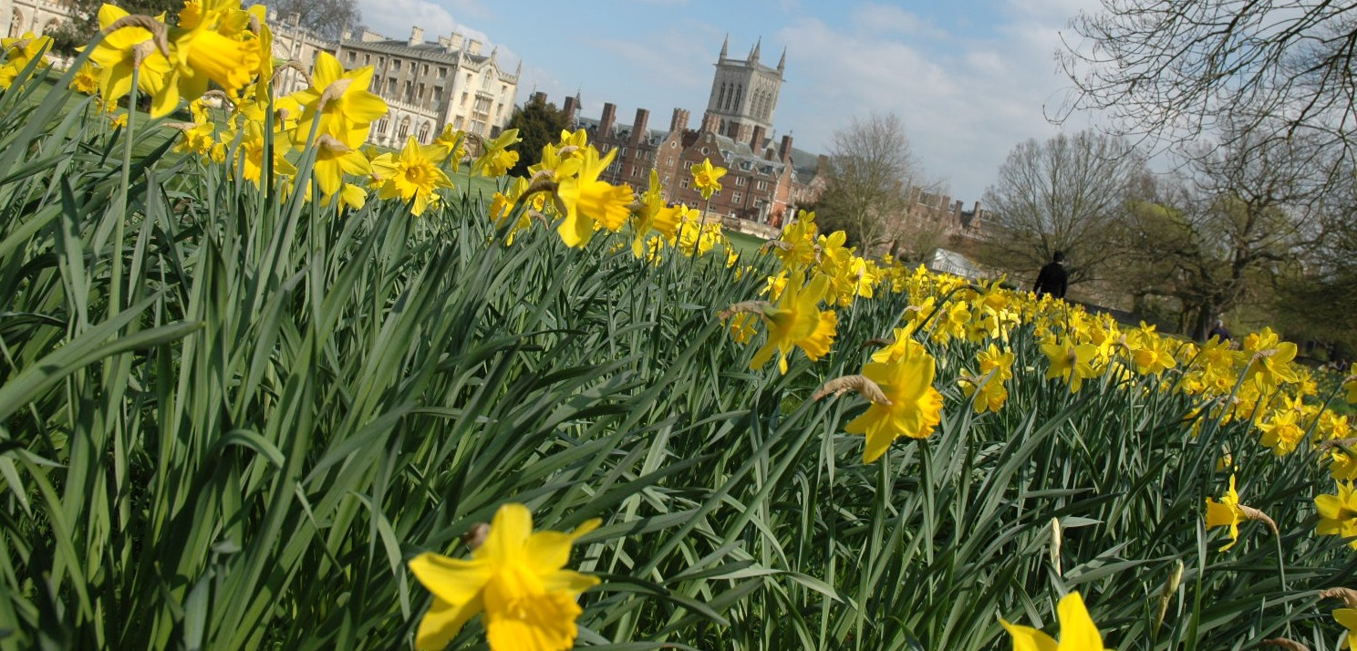 Daffs-with-St-Johns-slider-e1360067881260