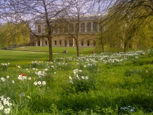 Wren Library in Spring